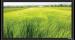 Цены на Экран Vutec ELEGANTE Fixed 110*195 MatteGrey Особенности: Превосходное качество по умеренной цене Рама 4 см в ширину Абсолютно плоское состояние полотна Прочный легкий алюминиевый корпус Черное бархатное покрытие рамы Настенный крепеж в комплекте Полотна: