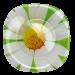 Цены на Десертная тарелка Paquerette Green Luminarc G0090 Luminarc Десертная тарелка Paqurette Green французской марки Luminarc послужит достойным оформлением для любимых сладостей. Яркая зеленая тарелка с цветочным принтом освежит сервировку стола и подчеркнет л
