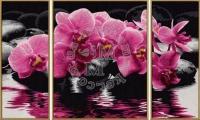 Schipper Орхидеи